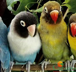 Fly & Drive: Especial Observación Aves